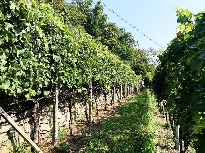 Image 2 - Azienda vinicola Mondò