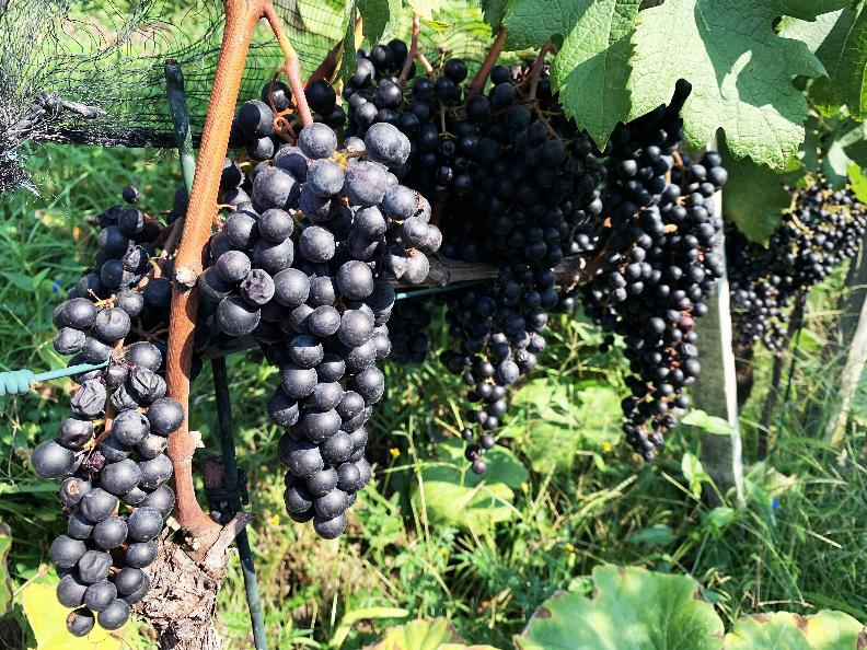 Image 3 - Azienda vinicola Mondò