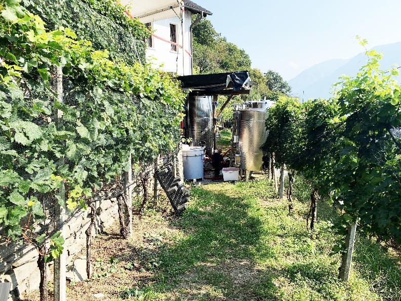 Image 1 - Azienda vinicola Mondò