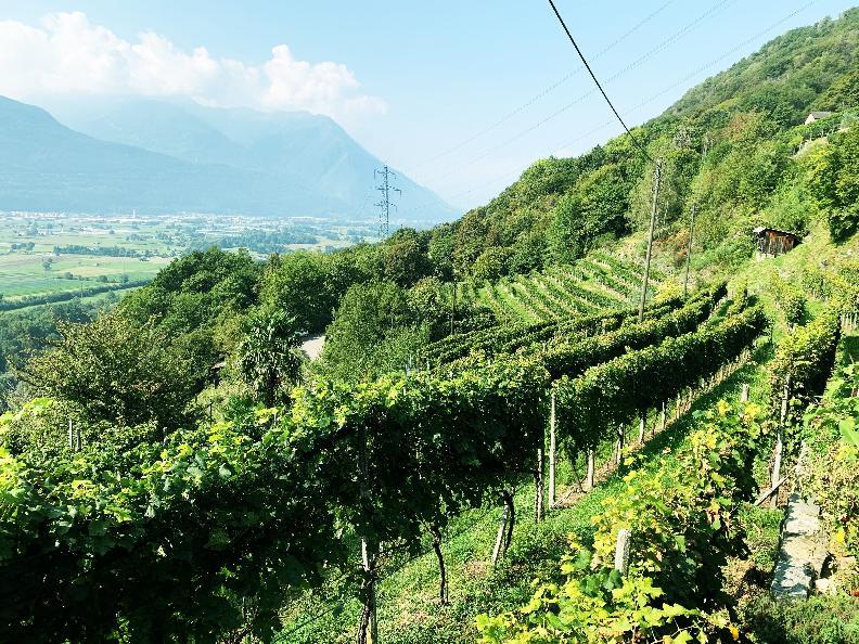 Image 10 - Azienda vinicola Mondò