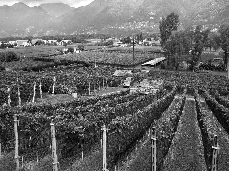 Image 2 - Wine cellar il Cavaliere