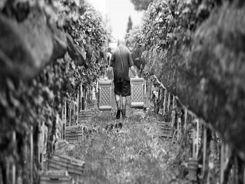 Image 3 - Wine cellar il Cavaliere