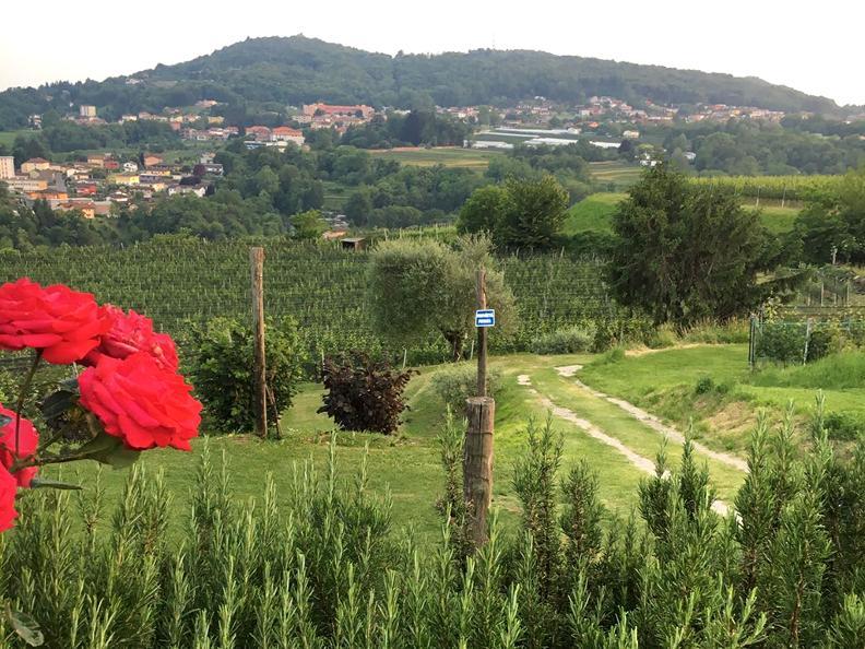 Image 1 - Wine cellar Trapletti SA