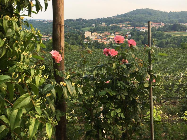 Image 2 - Wine cellar Trapletti SA