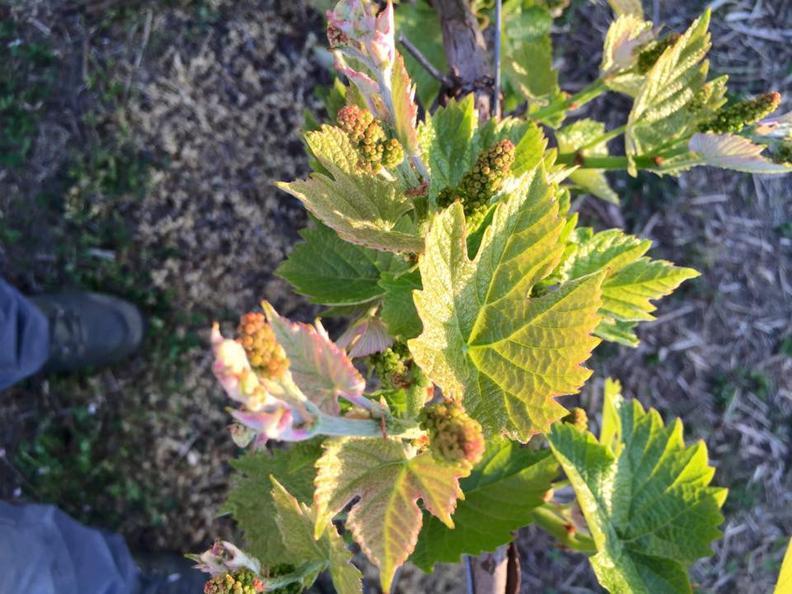 Image 4 - Cave vinicole Trapletti SA
