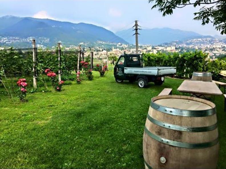 Image 3 - Wine cellar Trapletti SA