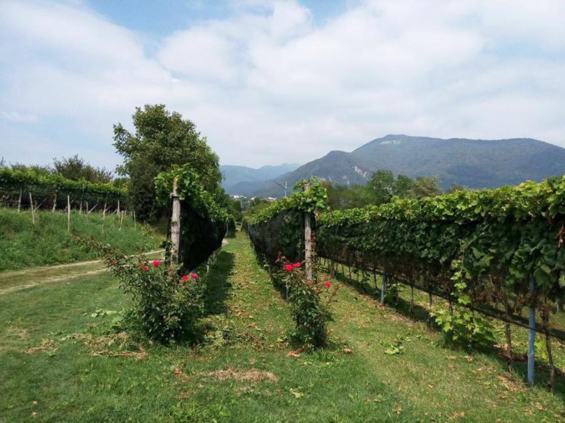 Image 0 - Wine cellar Trapletti SA