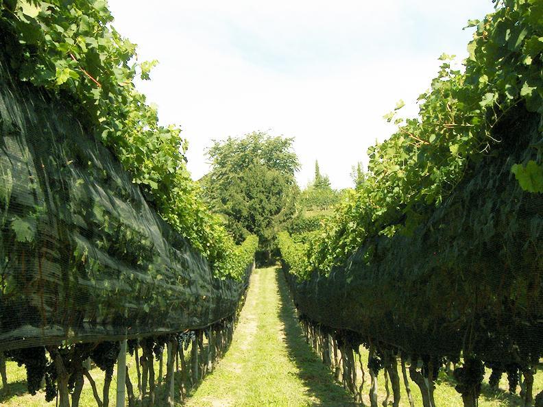 Image 5 - Wine cellar Trapletti SA