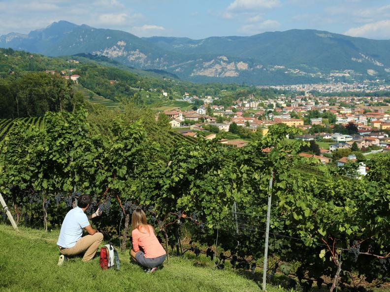 Image 2 - Ticinowine