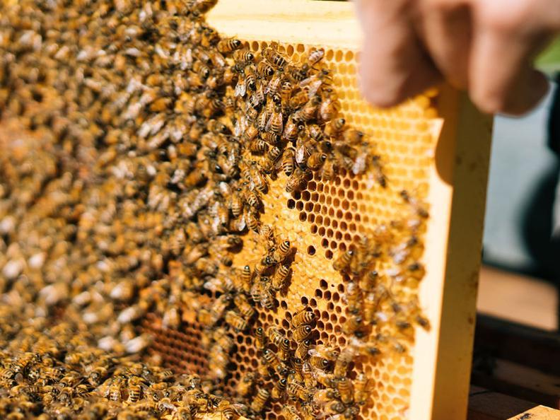 Image 3 - Le miel
