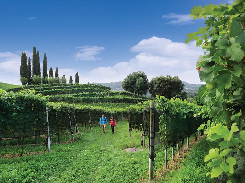 Image 0 - Le strade del vino