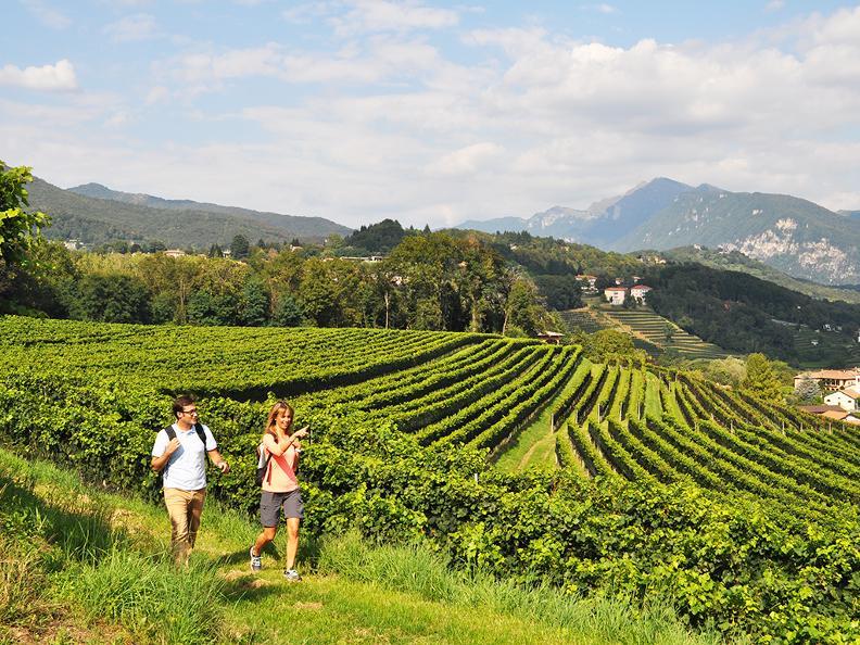 Image 4 - Le strade del vino