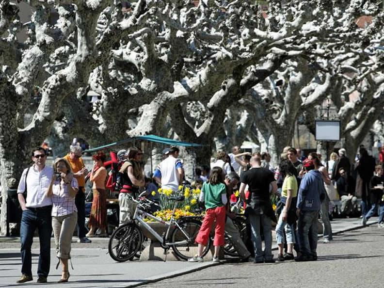 Image 2 - The market of Ascona