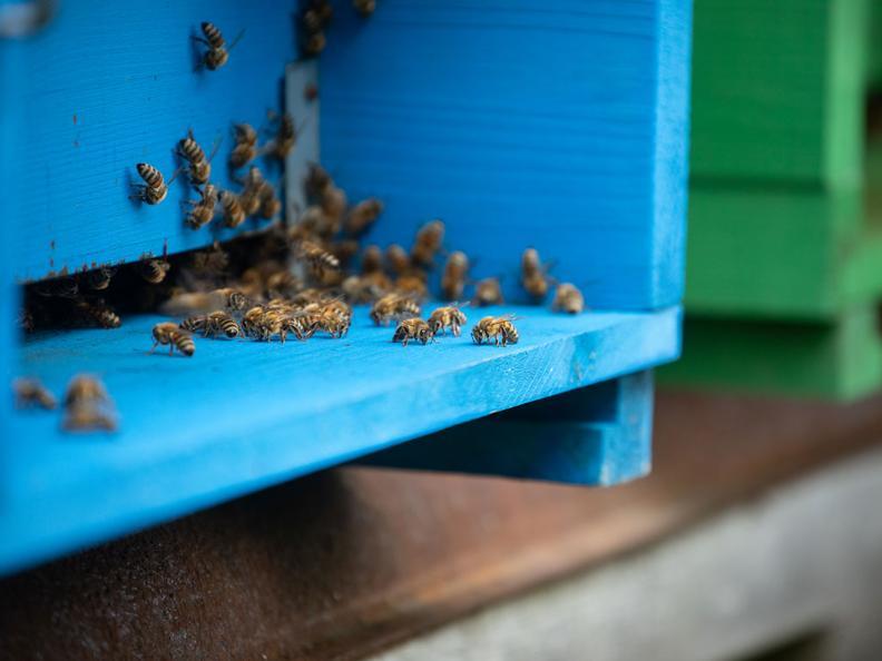 Image 5 - Le miel