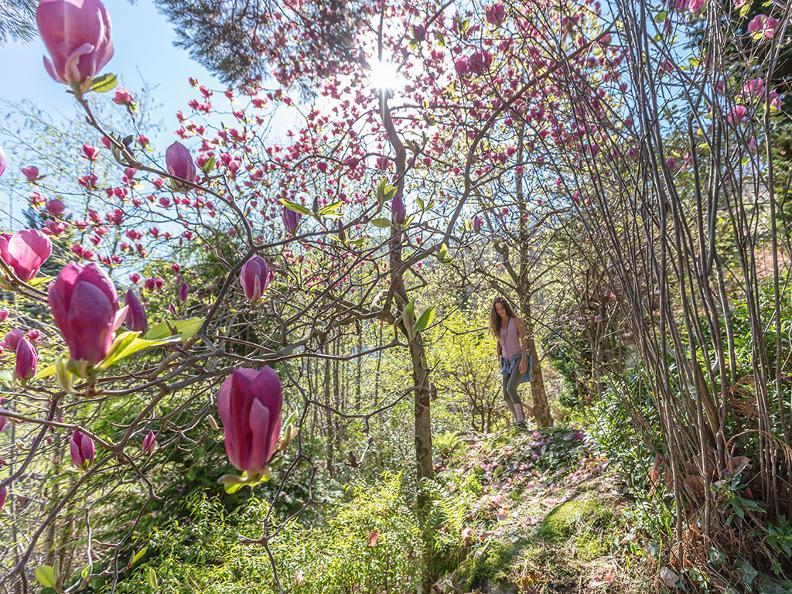 Image 0 - Parco botanico del Gambarogno