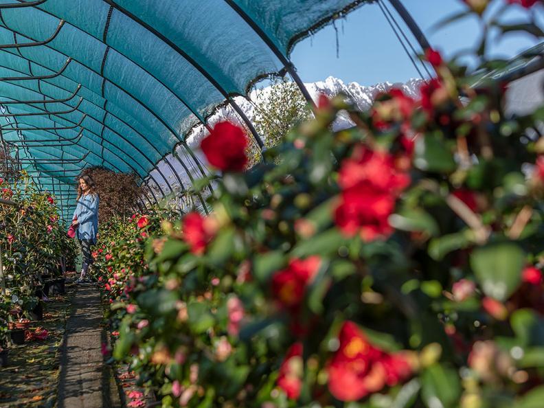 Image 8 - Parco botanico del Gambarogno