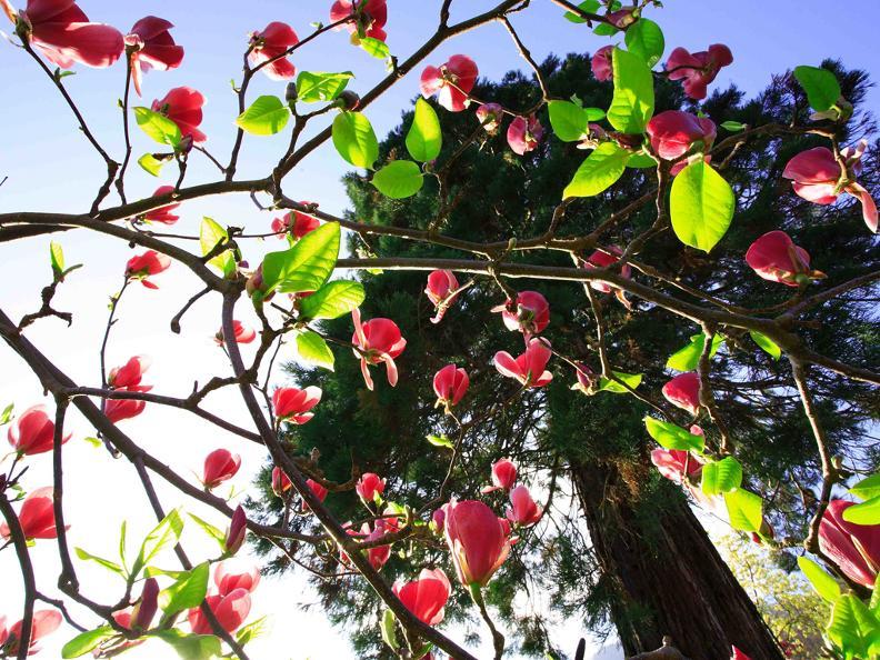 Image 0 - Botanischer Garten von Gambarogno
