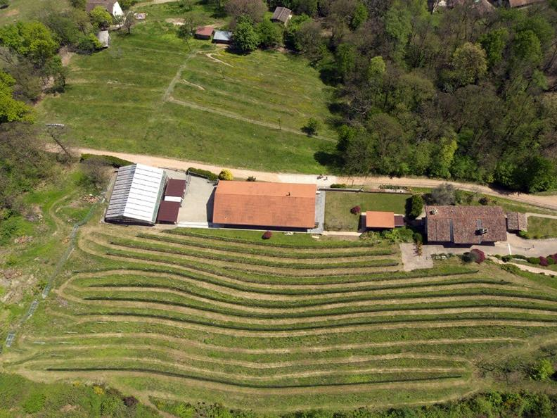 Image 1 - La Cappellaccia cantina vinicola