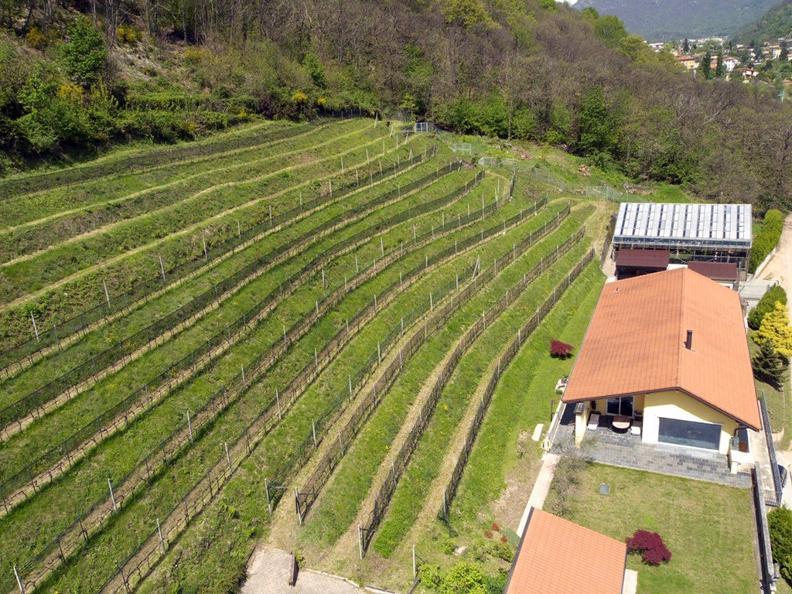 Image 2 - La Cappellaccia cantina vinicola