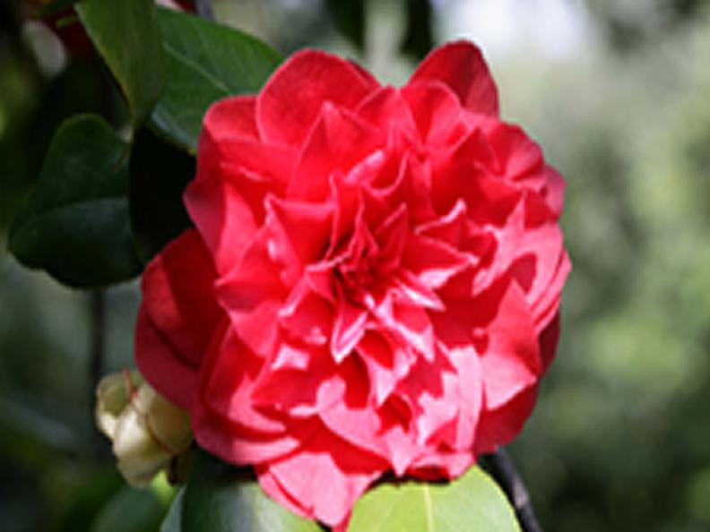Image 0 - Le printemps, la saison fleurie