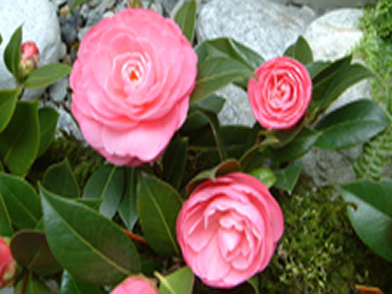 Image 1 - Le printemps, la saison fleurie