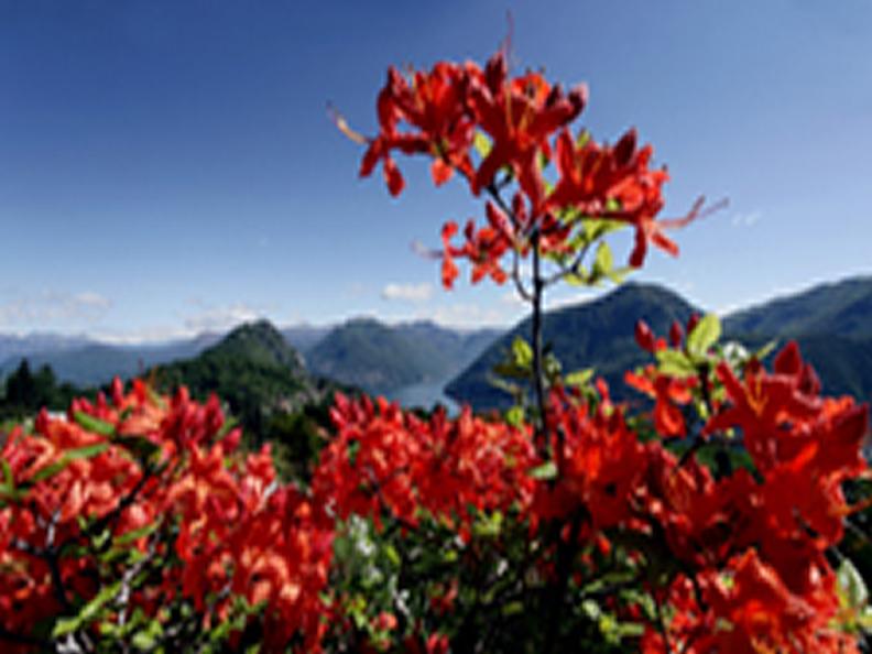 Image 2 - Le printemps, la saison fleurie