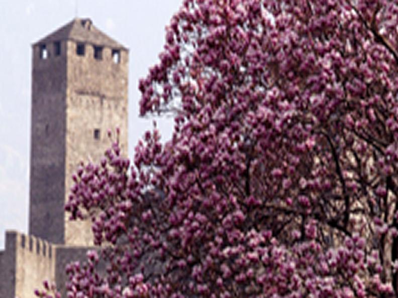 Image 3 - Le printemps, la saison fleurie