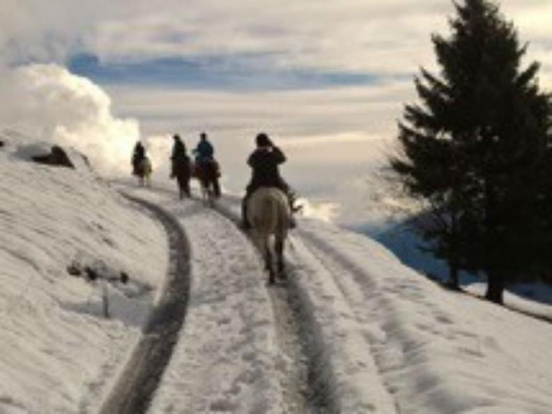 Image 2 - Horse rides in Valle Leventina: Leventina Western