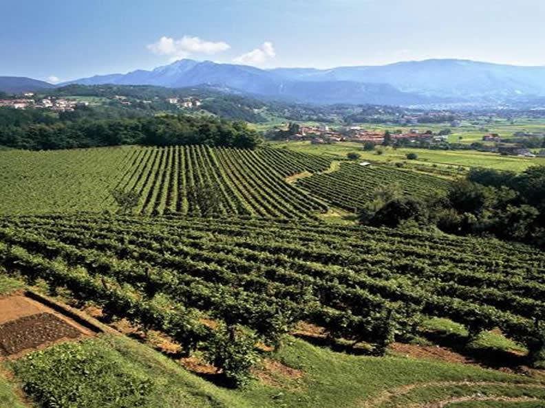 Image 1 - Grape Harvest in the Mendrisiotto Region