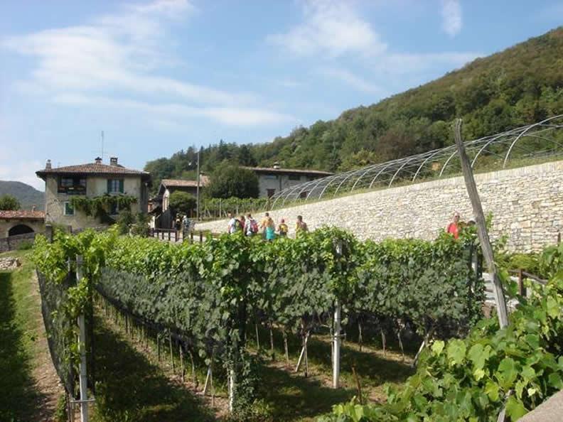 Image 2 - Grape Harvest in the Mendrisiotto Region
