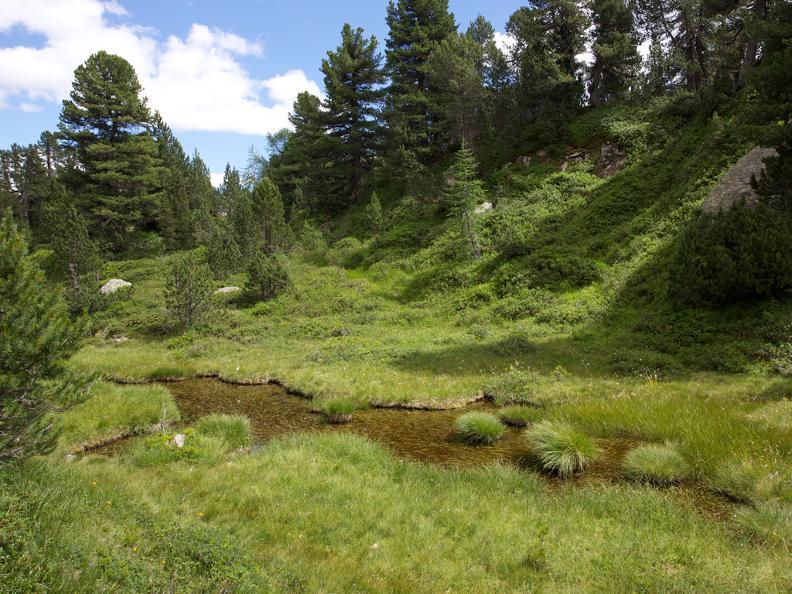 Image 3 - Naturetum - Centro Pro Natura Lucomagno