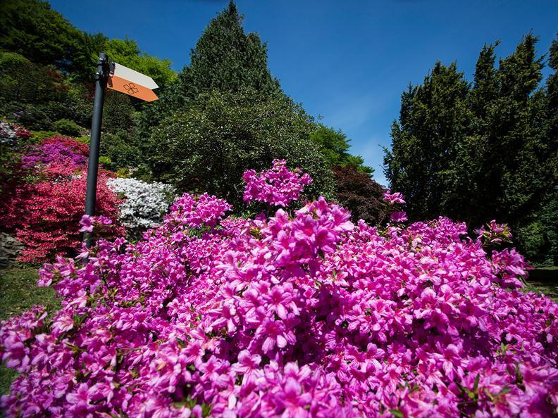 Image 2 - Park San Grato - Carona