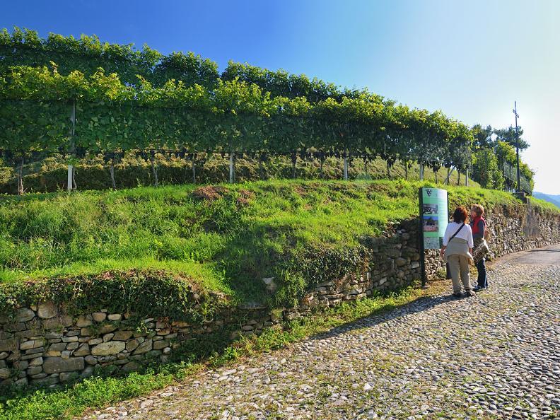 Image 0 - Wanderwege durch die Weinberge
