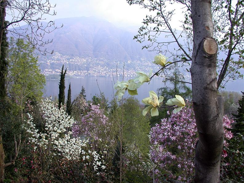 Image 3 - Gambarogno, the Riviera in bloom