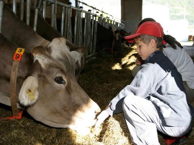 Image 2 - Agriturismi nel Malcantone, des vacances authentiques