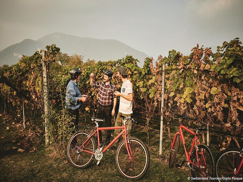 Image 2 - Mountain Bike Offer - Mendrisiotto Terroir