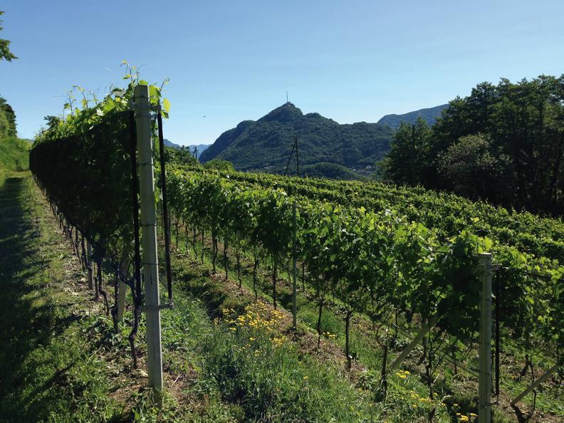 Image 1 - Cave vinicole Fratelli Corti SA