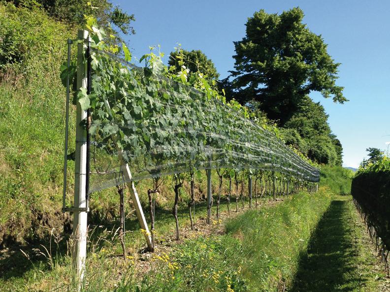 Image 2 - Cave vinicole Fratelli Corti SA