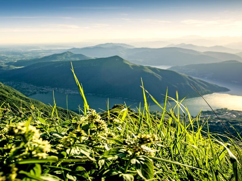 Image 3 - Discover Monte San Giorgio with Morsetta