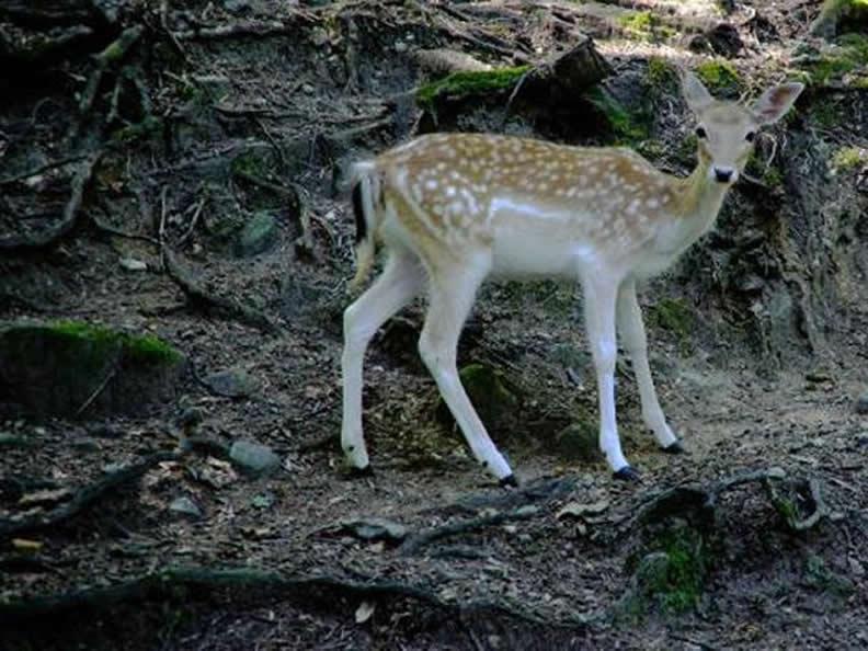 Image 6 - Villa Pallavicino Zoo&Park
