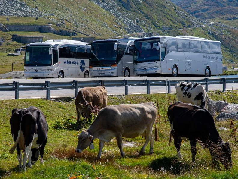 Image 2 - Valbus Viaggi SA