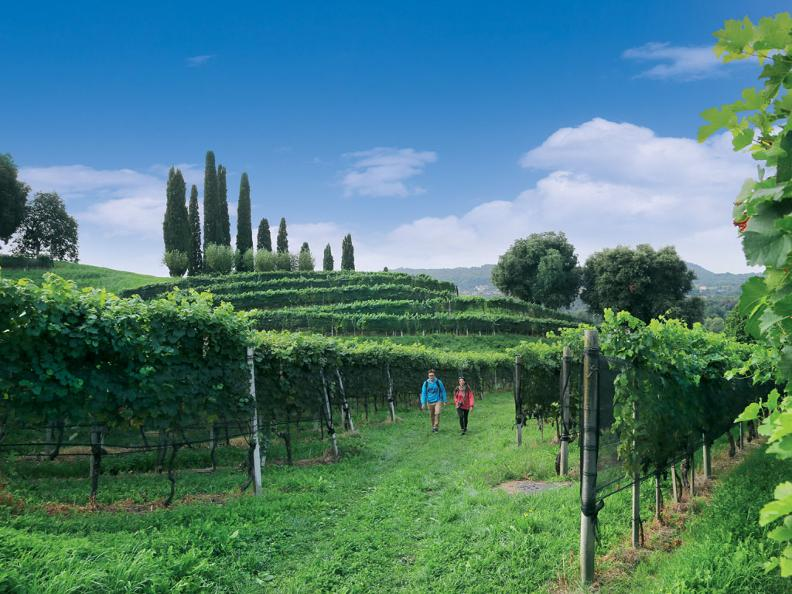 Image 0 - Seseglio: itineraries among vineyards
