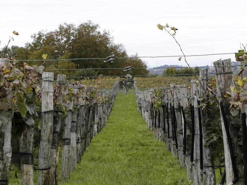 Image 4 - Seseglio: itineraries among vineyards