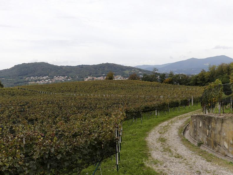 Image 5 - Seseglio: itineraries among vineyards