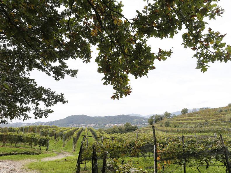 Image 7 - Seseglio: itineraries among vineyards