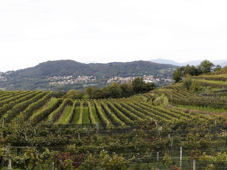 Image 8 - Seseglio: itineraries among vineyards