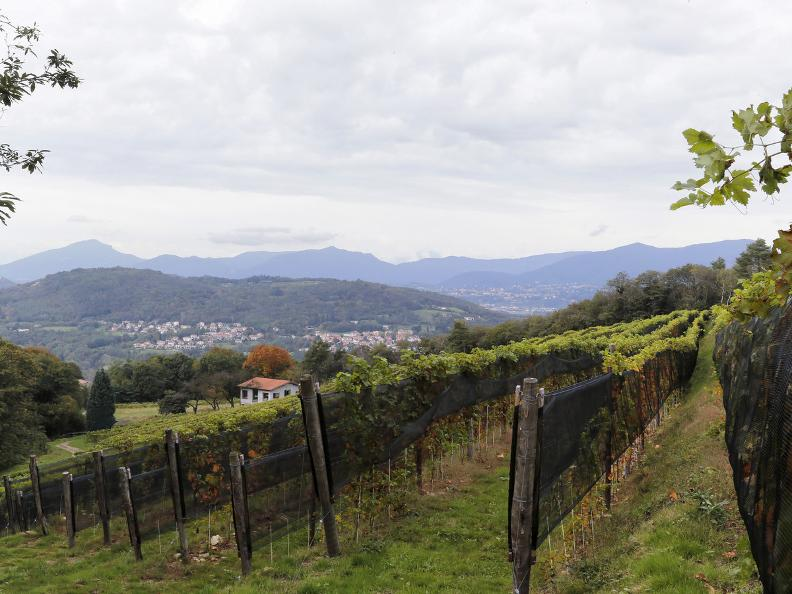 Image 9 - Seseglio: itineraries among vineyards