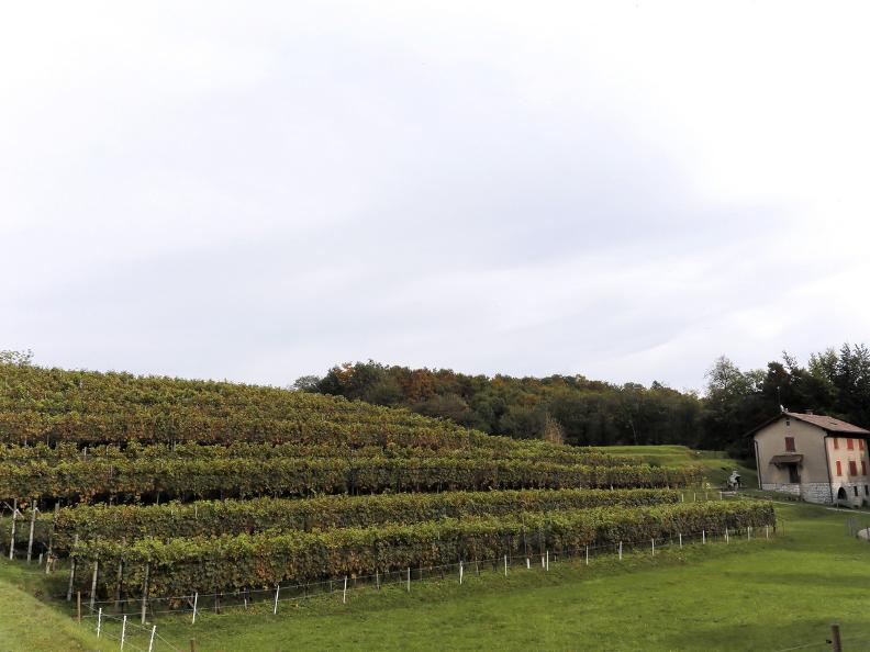 Image 16 - Seseglio: itineraries among vineyards