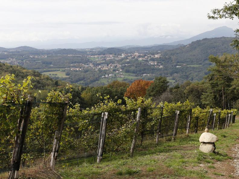 Image 10 - Seseglio: itineraries among vineyards