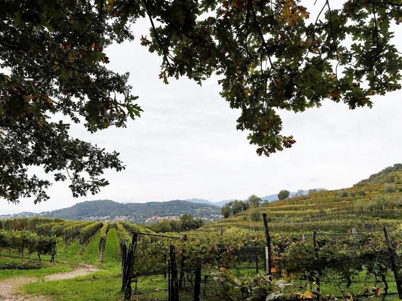 Image 7 - Itinerario culturale del Basso Mendrisiotto